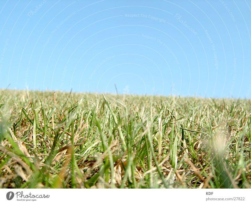 Sommergras Gras Schönes Wetter Blauer Himmel grün blau Physik Wiese Sportrasen Rasen Liegewiese schön Fröhlichkeit Halm Detailaufnahme Bremen Hügel einladend