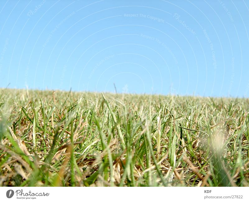 Sommergras schön grün blau Wiese Gras Wärme Horizont Fröhlichkeit Rasen Sportrasen Physik Hügel Langeweile Halm Schönes Wetter