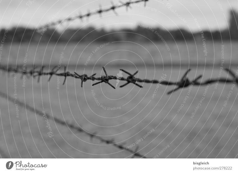 Sachsenhausen III grau Metall Europa Bundesadler Denkmal Justizvollzugsanstalt Kleinstadt Stacheldrahtzaun Konzentrationslager Oranienburg