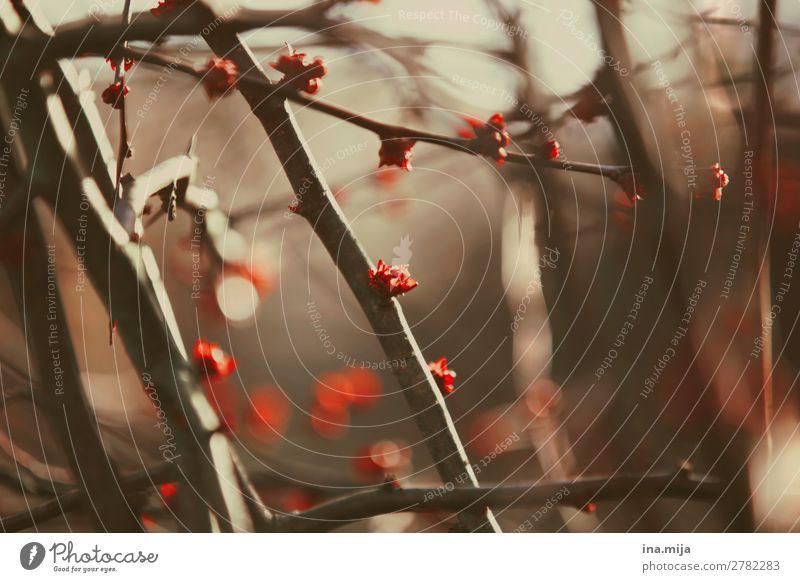 Der Frühling in kleinen Schritten Umwelt Natur Pflanze Herbst Sträucher Garten Park Wald Blühend träumen Wachstum Beginn ästhetisch Zufriedenheit Hoffnung