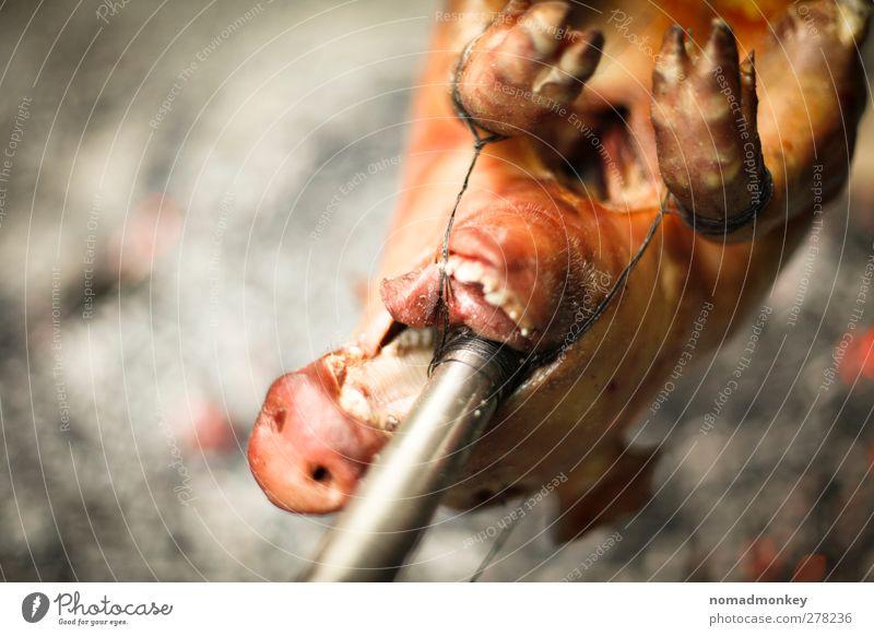 Roasted Pig Fleisch Grillsaison Totes Tier Schwein Schweinebraten Essen Fressen Farbfoto Außenaufnahme Menschenleer Textfreiraum links Tag