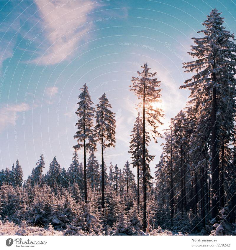 Heiter bis Wolkig.... Winter Schnee Winterurlaub Landwirtschaft Forstwirtschaft Natur Landschaft Pflanze Himmel Wolken Sonne Klima Schönes Wetter Eis Frost Wald