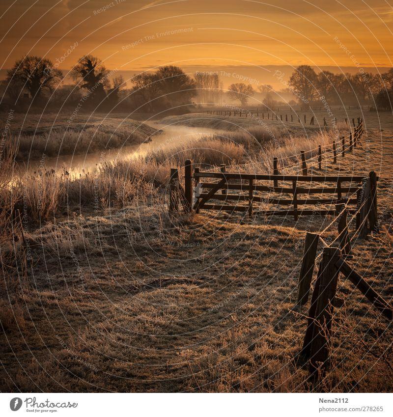 Aurore hivernale Umwelt Natur Landschaft Erde Luft Wasser Himmel Wolken Winter Klima Wetter Nebel Eis Frost Baum Wiese Flussufer kalt schön gold orange Zaun