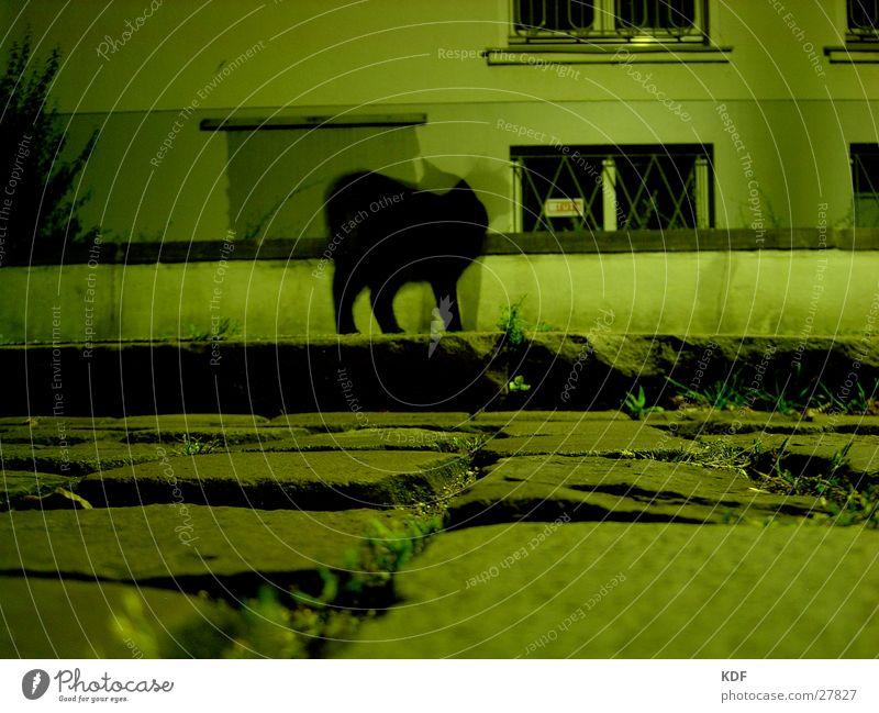 sie sieht mich, sie sieht mich nicht... schwarz Mauer Katze Kopfsteinpflaster