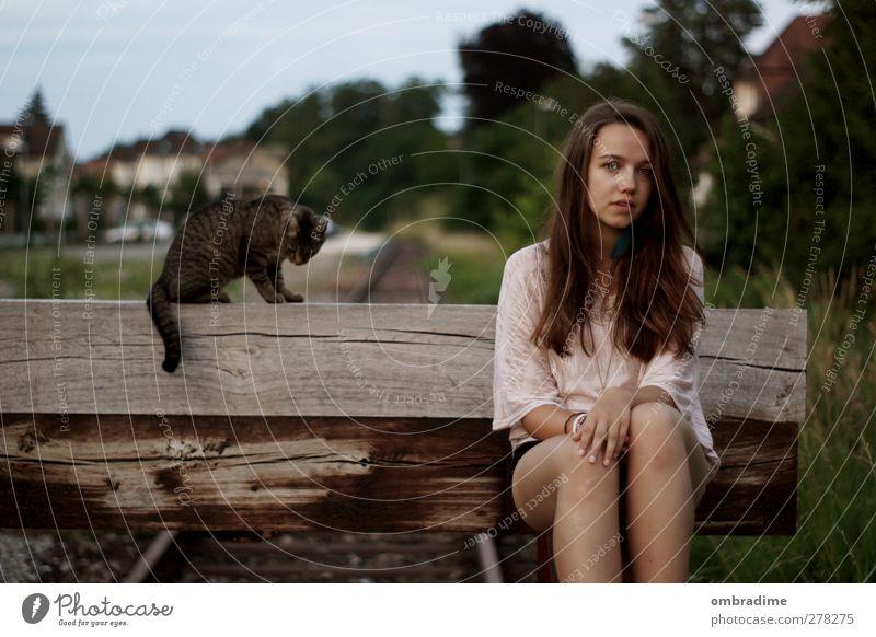 CATS harmonisch Wohlgefühl Zufriedenheit ruhig Mensch feminin Junge Frau Jugendliche Erwachsene Leben 1 Umwelt Natur Sommer brünett langhaarig Katze Tier