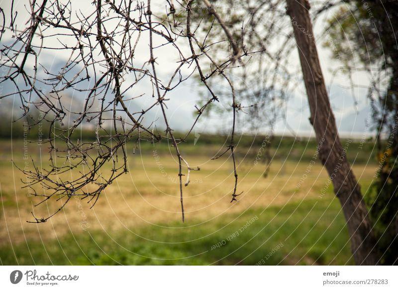dörr Natur Baum Landschaft Umwelt braun Feld Ast trocken