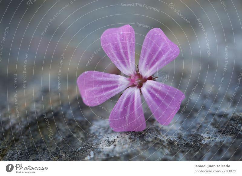 Natur Sommer Pflanze Blume Winter Herbst Frühling Garten rosa Dekoration & Verzierung Beautyfotografie Blütenblatt geblümt