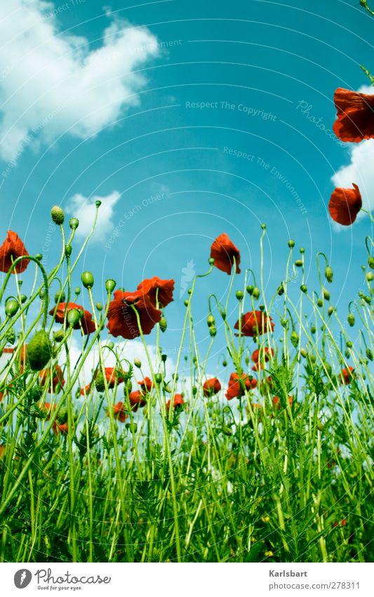free credit mo[h]nday Himmel Natur Ferien & Urlaub & Reisen Pflanze Sommer Erholung Landschaft Blatt Wolken Umwelt Blüte Wiese Gesundheit Garten Freiheit