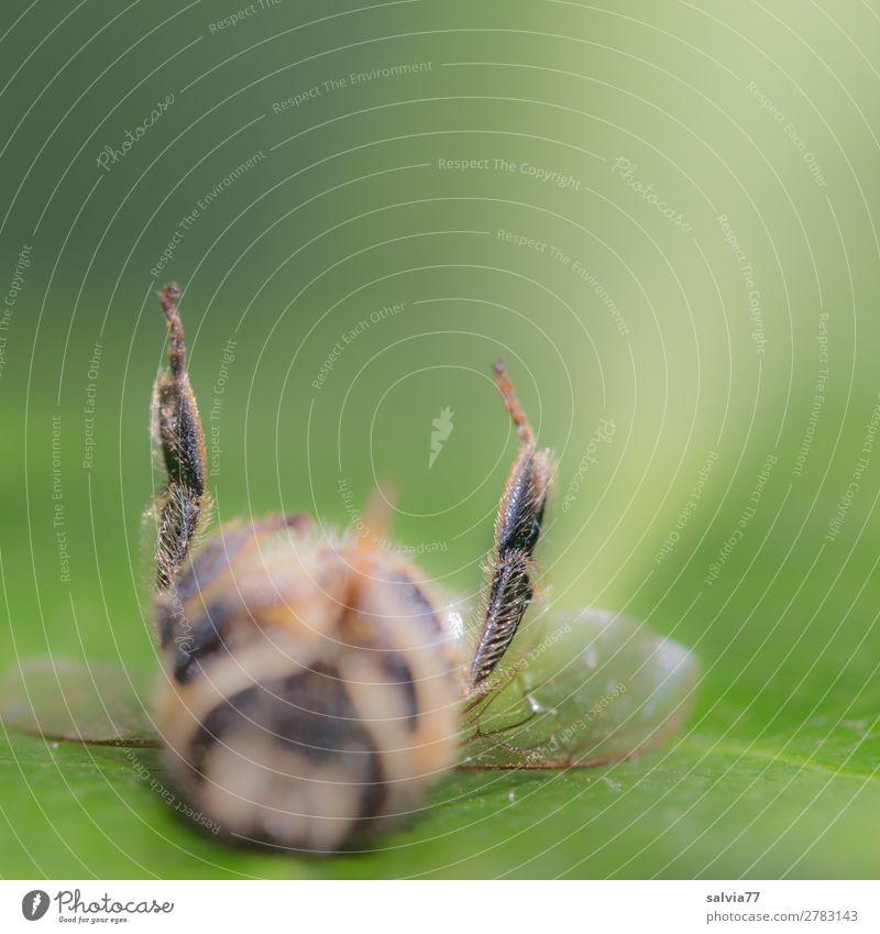 unscharf | Biene Umwelt Natur Tier Nutztier Tiergesicht Flügel Insekt Honigbiene 1 Tod Vergänglichkeit Hinterbein Pollenkörbchen Farbfoto Außenaufnahme