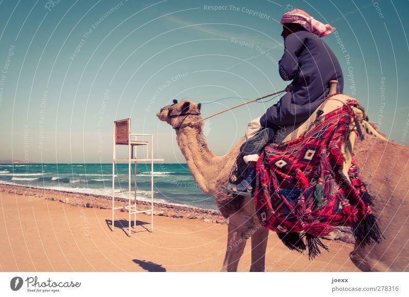 Ausritt maskulin Mann Erwachsene 1 Mensch Himmel Horizont Sommer Schönes Wetter Küste Tier Geschwindigkeit blau braun mehrfarbig Ferien & Urlaub & Reisen Kamel