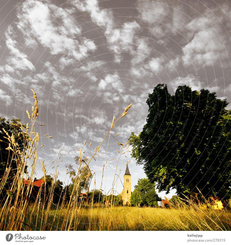 kirche im dorf Umwelt Natur Landschaft Pflanze Tier Himmel Wolken Baum Gras Dorf Haus Kirche Platz Spitze Kirchturm Religion & Glaube Christentum Brandenburg
