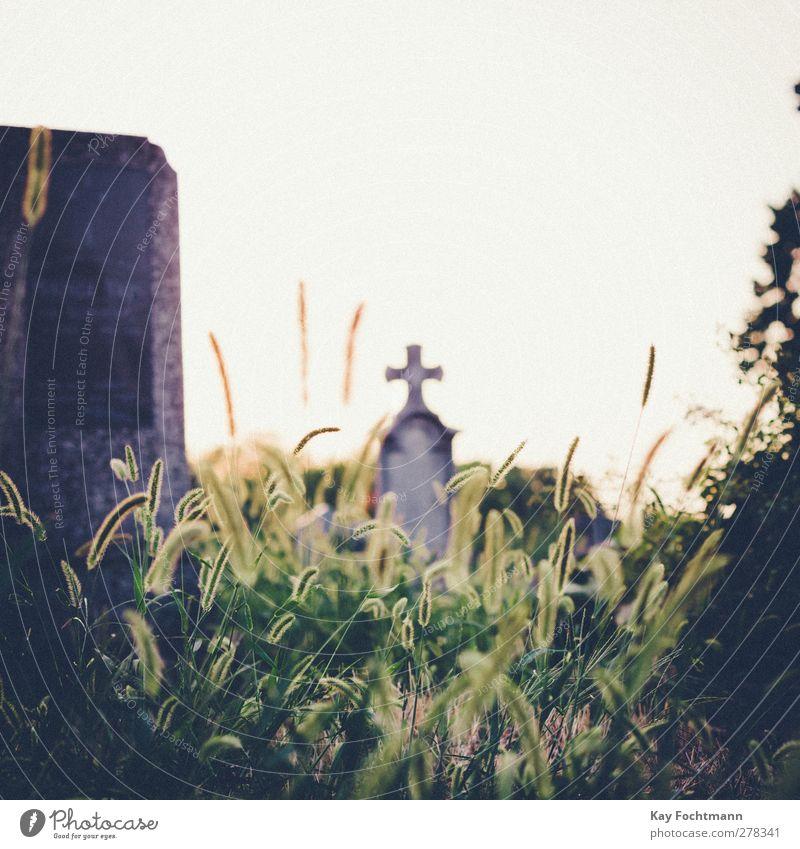 ° grün Stadt Tod Wärme Gefühle Gras Religion & Glaube Traurigkeit Schönes Wetter Vergänglichkeit Trauer Sehnsucht Schmerz Friedhof verlieren Grünpflanze