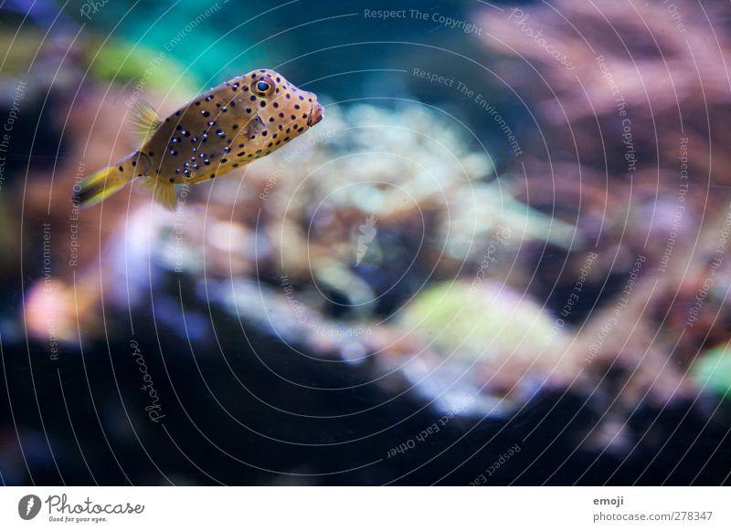 gepunktet Meer Tier glänzend Fisch Zoo exotisch Aquarium Kofferfische