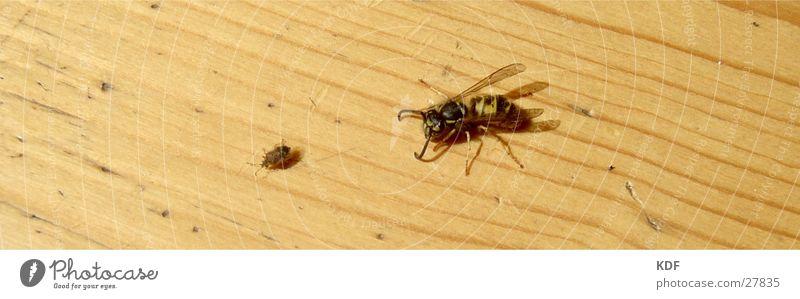 auf Jagt gelb laufen gefährlich Insekt Jagd Flucht Parkett Wespen Wanze