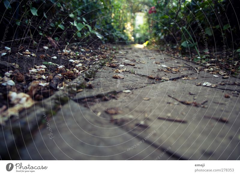 welk Umwelt Natur Erde Herbst Garten Park Wald natürlich braun Steinplatten Farbfoto Gedeckte Farben Außenaufnahme Nahaufnahme Menschenleer Tag Dämmerung Licht