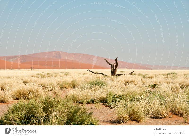 Gestorben aus Einsamkeit Natur Landschaft Ferne Umwelt Tod Gras Schönes Wetter Wüste Stranddüne Düne Baumstamm Wolkenloser Himmel Klimawandel Grasland Steppe