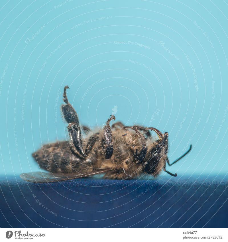 Gedankenspiele | was wäre wenn Natur blau Tier Umwelt Tod Vergänglichkeit Insekt Biene Ende Umweltschutz Sorge Verantwortung Nutztier verlieren Honigbiene