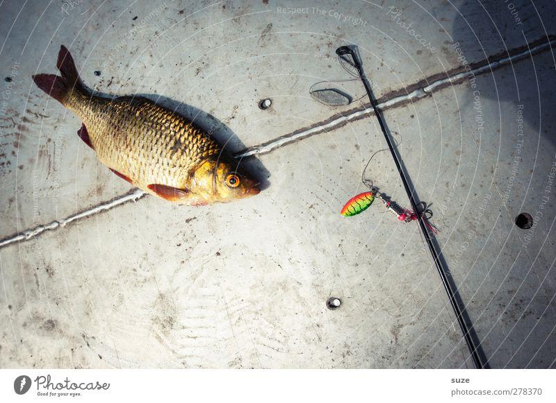 Rotfeder Tier Tod grau liegen Wildtier Freizeit & Hobby authentisch Fisch Angeln Fischereiwirtschaft Haken Angelrute Angelköder Totes Tier Angelgerät