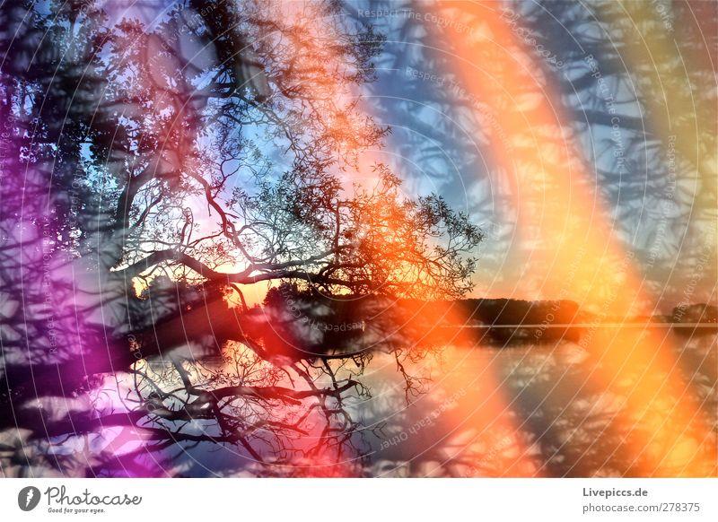 Farben am Seeufer 1 Himmel Natur blau Wasser Sommer Baum Pflanze Strand Blatt Landschaft Umwelt Küste Kunst orange leuchten