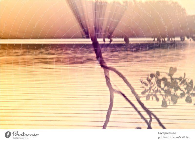 Farben am Seeufer 2 Natur Wasser Sommer Baum Pflanze Sonne Blatt Landschaft gelb Umwelt Küste Kunst gold leuchten Schönes Wetter