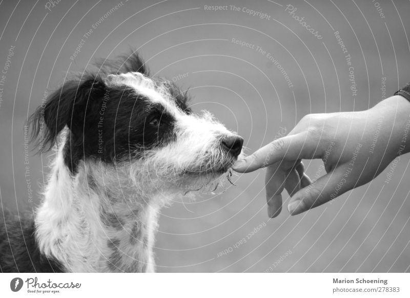 Kommunikation ohne Worte Hund Hand Tier Vertrauen Tiergesicht Zusammenhalt Haustier