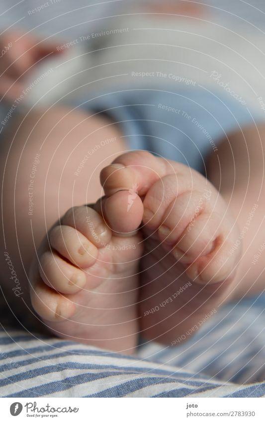Kleine Füßchen Mensch Baby Fuß 1 0-12 Monate Unterwäsche berühren liegen schlafen Wachstum nackt niedlich blau Beginn Erholung Frieden Gesundheit Idylle