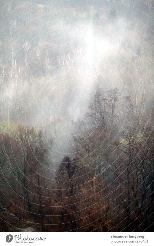 fog Rauch Rauchen Farbfoto Nebel Nebelwald Textfreiraum oben Landschaft Menschenleer Waldbrand