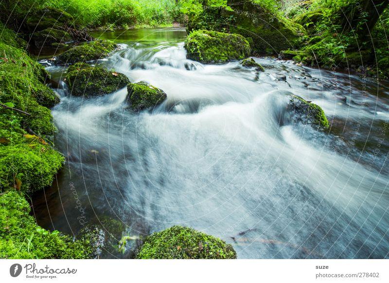 Alles im Fluß schön Umwelt Natur Landschaft Pflanze Urelemente Wasser Moos Felsen Flussufer Oase Stein Wachstum frisch nachhaltig nass natürlich grün Idylle