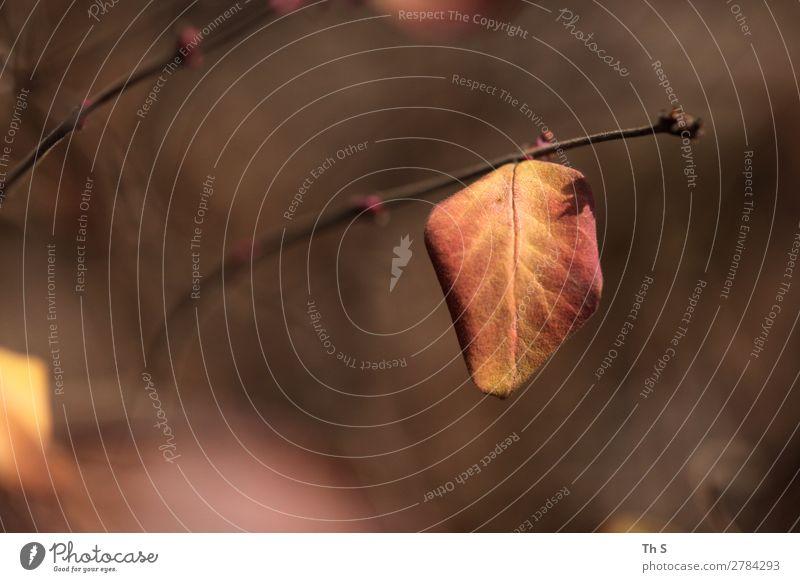 Blatt Natur Pflanze Herbst Winter Wald verblüht ästhetisch authentisch einfach elegant natürlich braun gelb rot Gelassenheit geduldig ruhig Farbe