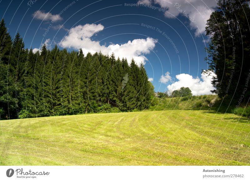frisch gemäht Umwelt Natur Landschaft Pflanze Luft Himmel Wolken Sommer Wetter Schönes Wetter Wärme Baum Gras Sträucher Blatt Grünpflanze Wiese Wald Hügel blau