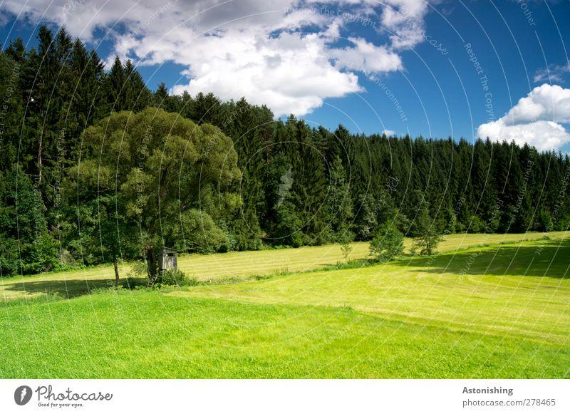 entlang des Baches Landschaft Pflanze Luft Himmel Wolken Sommer Wetter Schönes Wetter Wärme Baum Gras Sträucher Grünpflanze Wildpflanze Wiese Wald blau gelb