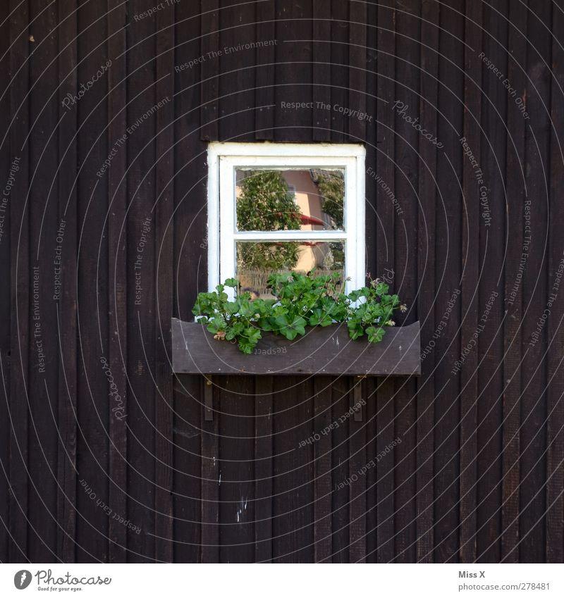 Fensterchen grün Blume Fenster Wohnung Hütte ländlich Blumenkasten Holzhütte