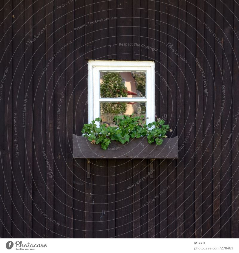Fensterchen grün Blume Wohnung Hütte ländlich Blumenkasten Holzhütte