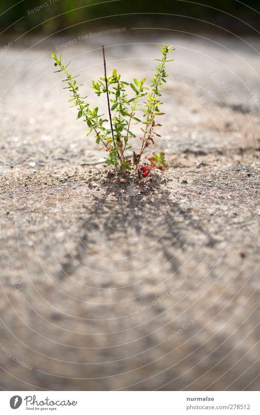 zart und klein Garten Kunst Natur Pflanze Tier Sommer Schönes Wetter Grünpflanze Wildpflanze Lupe glänzend leuchten Wachstum schön nachhaltig natürlich Stimmung