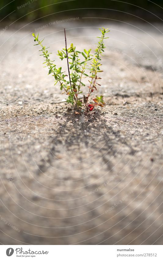 zart und klein Natur schön Sommer Pflanze Tier Blatt Umwelt Garten Kunst Stimmung Kraft natürlich glänzend Wachstum leuchten ästhetisch