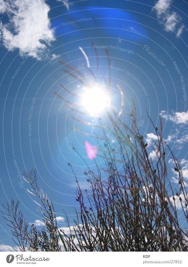 Noch so eins...... Sonne Blume Sommer Erholung Gras liegen Langeweile Blauer Himmel Finnland Wolkenfetzen