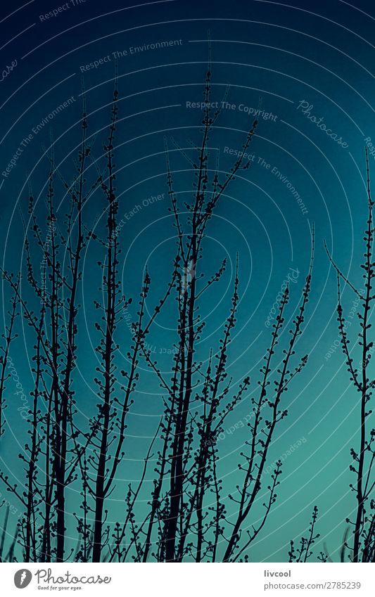Baumäste im Winter bei Sonnenuntergang Garten Natur Landschaft Pflanze Urelemente Park Feld Hügel Stadt Straße Coolness niedlich blau Einsamkeit Ast