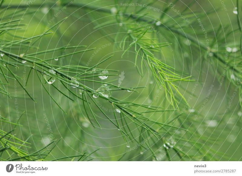 Morgentau im Garten Frühling Pflanze Grünpflanze Nutzpflanze schön grün Frühlingsgefühle Beginn Gemüse Gesundheit Gesunde Ernährung Tau Tropfen Wassertropfen