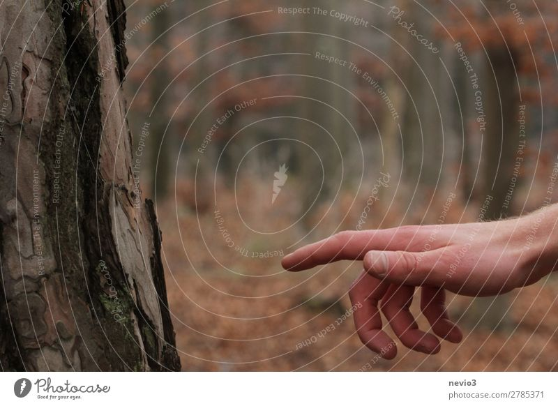 Der sixtinische Wald Arme Hand 1 Mensch Umwelt Natur orange Klima Waldlichtung Leben Schaffung erhalten bewahren Schutz Umweltschutz Naturschutzgebiet Baum