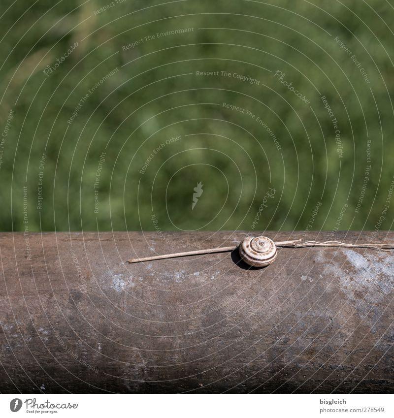 Schneckenhaus Tier 1 liegen schön klein braun grün Farbfoto Außenaufnahme Menschenleer Textfreiraum oben Textfreiraum unten Tag Schwache Tiefenschärfe