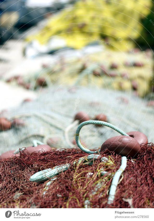 Fischfanggeräte Lebensmittel Meeresfrüchte Sushi Ferien & Urlaub & Reisen Arbeitsplatz Wellen Küste Seeufer Flussufer Nordsee Ostsee Schwimmen & Baden fangen