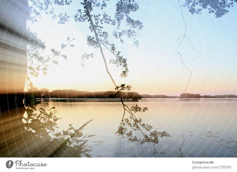 Dämmerung an der Müritz Himmel Natur blau Wasser Sommer Baum Pflanze Sonne Blatt Landschaft gelb Umwelt Küste See leuchten Schönes Wetter