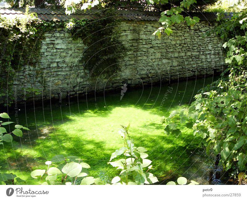 Am kleinen Bachlauf im Park Wasser Sonne grün Pflanze Sommer Mauer nass Fluss Lichteinfall bewachsen gleißend Wasserpflanze Bruchstein Mittagssonne