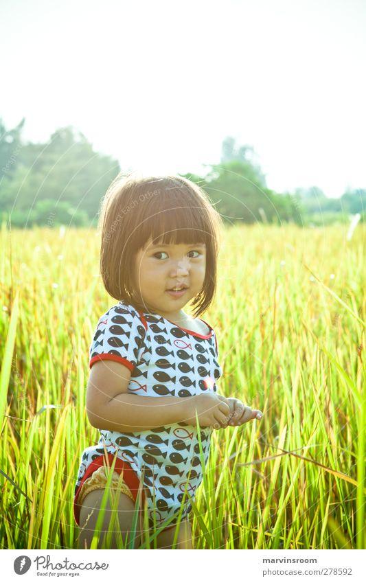 die Goldfelder Mensch Kind Mädchen 1 1-3 Jahre Kleinkind Schönes Wetter Gras niedlich Farbfoto Außenaufnahme Morgen Sonnenlicht Sonnenaufgang Sonnenuntergang