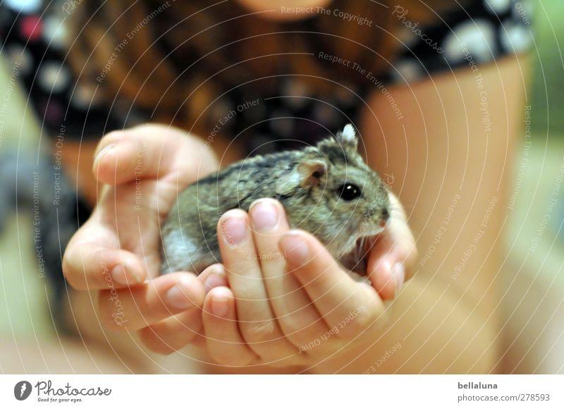 Karli | Gehalten Mensch feminin Kind Mädchen Kindheit Leben Arme Hand Finger 1 8-13 Jahre Tier Haustier tragen grau schwarz weiß Hamster Zwerghamster Dschungare