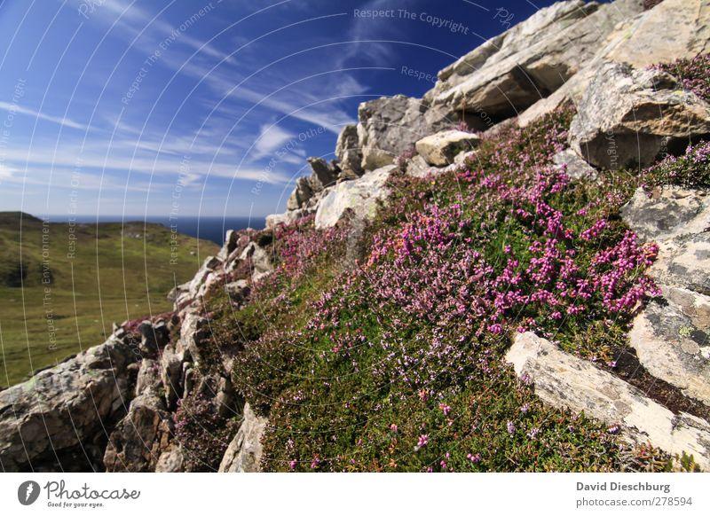 Einsame Bergwelt Himmel Natur blau Ferien & Urlaub & Reisen grün Sommer Pflanze Meer Blume Wolken Landschaft Berge u. Gebirge Gras grau Stein Felsen