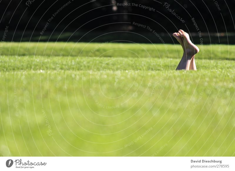 Wiesentieftauchen Erholung ruhig Sommer Leben Fuß 1 Mensch Natur Schönes Wetter Gras Grünpflanze Garten Park grün schwarz Frühlingsgefühle liegen Beine