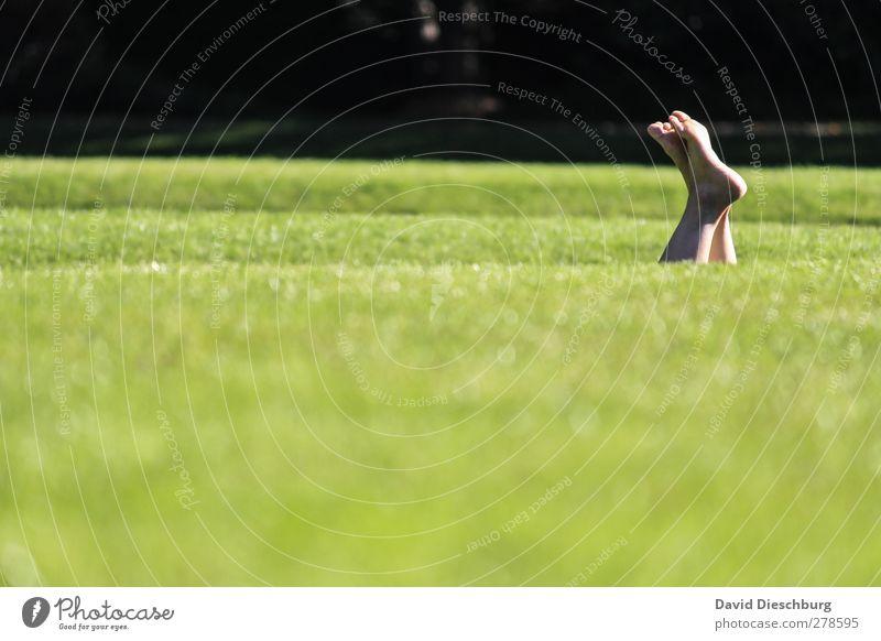 Wiesentieftauchen Mensch Natur grün Sommer ruhig schwarz Erholung Landschaft Leben Gras Garten Beine Fuß Park liegen