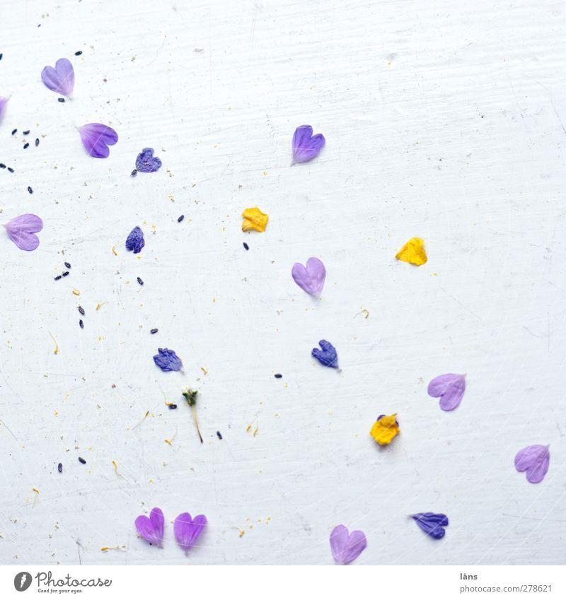 herzig Pflanze Blüte Herz gelb violett weiß Glück Frühlingsgefühle Liebe Verliebtheit Wandel & Veränderung herzlich gefallen Farbfoto Innenaufnahme