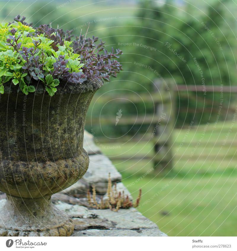 Landleben Blumentopf Mauer Mauerpflanze Gartenzaun Steinmauer Zaun Sommergarten Topfpflanzen Holzzaun alt Geborgenheit draußen ruhig nah Idylle alte mauer